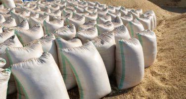 Grains Business